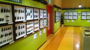 H25昆虫展風景1