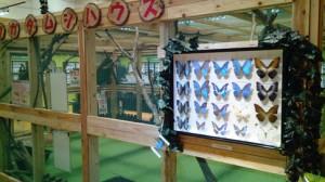 H25昆虫展風景2