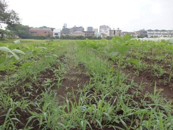 1雑草が生えた畑