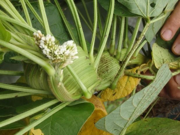 6錫杖の花2