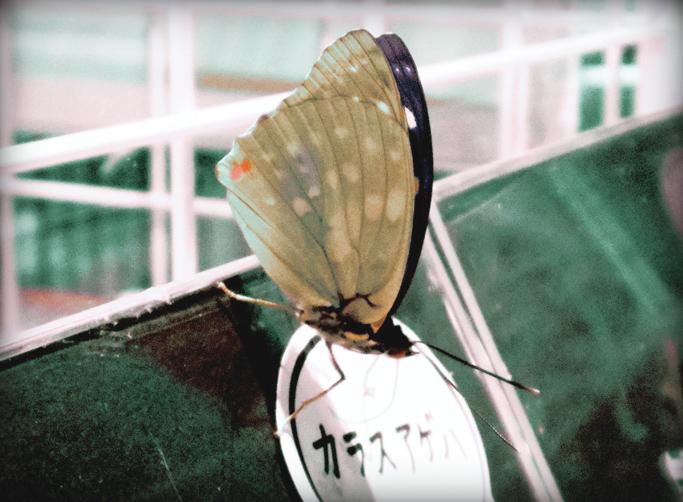 IMGP0465