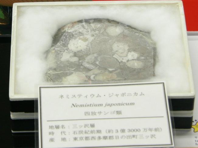 ネミスティウム・ジャポニカム