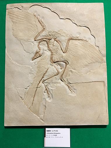 ロクトリポート用始祖鳥画像