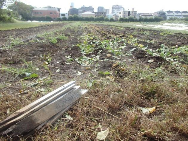 13収穫後の畑