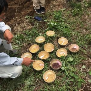 3播種用大豆